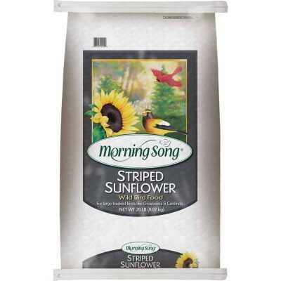 Morning Song 20 Lb. Striped Sunflower Wild Bird Seed
