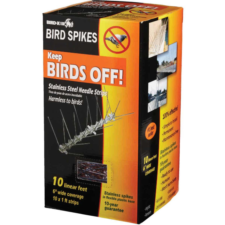 Bird X Stainless Steel 10 Ft. L. Bird Control Spikes Image 6